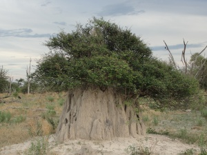 20-04 Abandoned termite mound