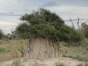 20-04 Abandoned termite mound