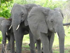 20-07 Elephant family