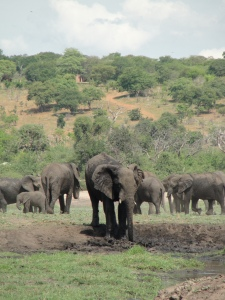 20-15 Elephant watering hole