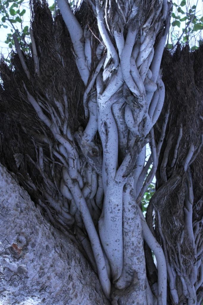 23 07 Roots B