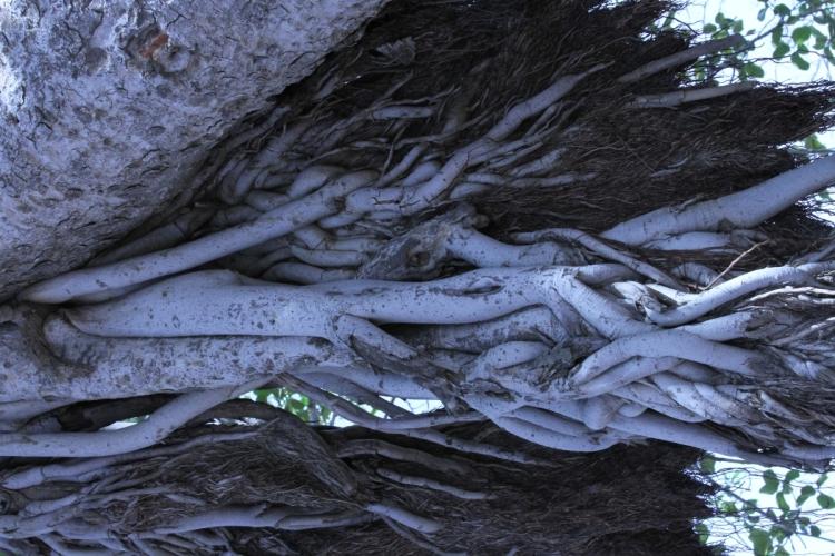 26 04 Roots C